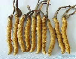 Đông trùng hạ thảo là gì -Giá đông trùng hạ thảo như thế nào ?