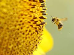 Tác dụng của sữa ong chúa từ A đến Z