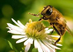 Cách làm đẹp từ sữa ong chúa cực chất cho chị em