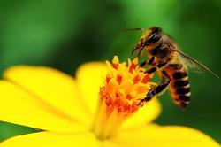 Cách dùng  sữa ong chúa tươi đơn giản mà hiệu quả