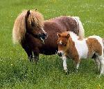 Sự Thật Nhau Thai Ngựa Có Tác Dụng Như Thế Nào Trong Việc Làm Đẹp?