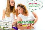 Green Coffee Bean có tốt không?