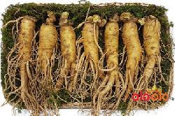 Nhân sâm tươi Hàn Quốc 7 củ 1 kg đựng khay