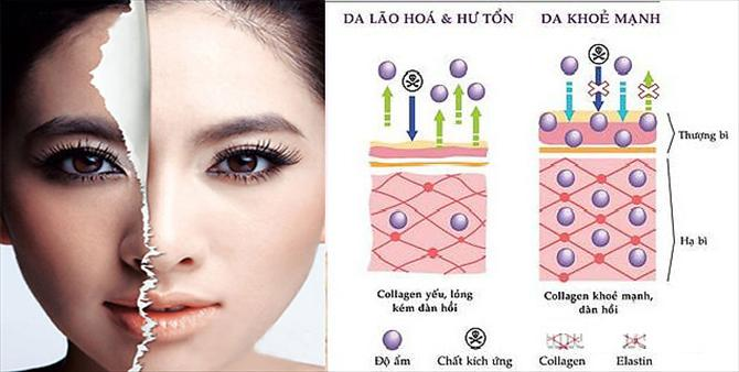 collagen 500mg